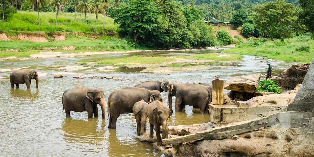 Elephant Opernage & Temple of the tooth